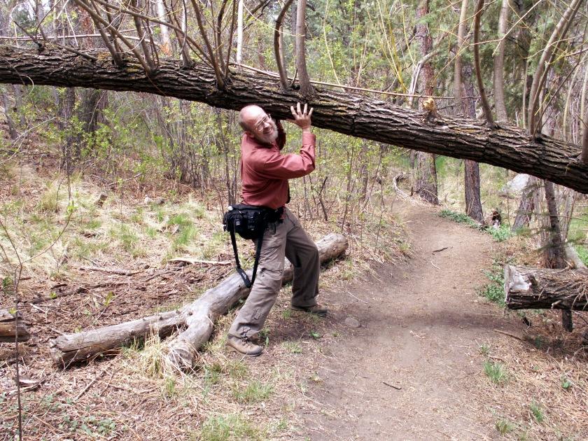 holding up tree.jpeg