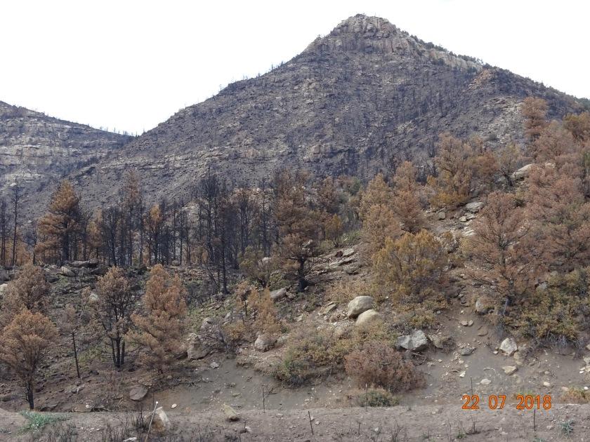 Ute Park Fire