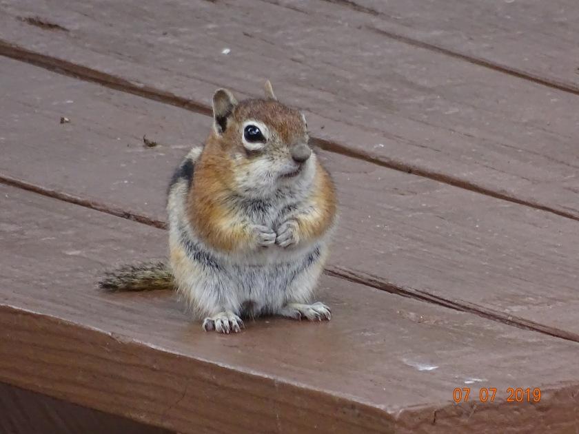 ground squirrel.jpeg